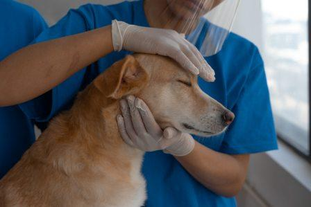 First Aid For Dog